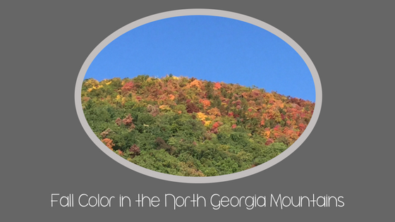 Fall Color in the North Georgia Mountains
